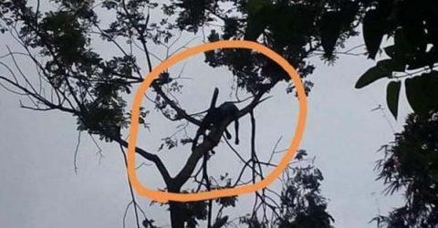 কানাইঘাটে গাছের ডাল কাটতে গিয়ে যুবকের মৃত্যু