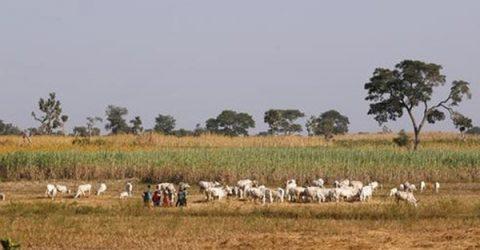 নাইজেরিয়ায় কৃষি খামারে 'জঙ্গি হামলায় নিহত ৪০